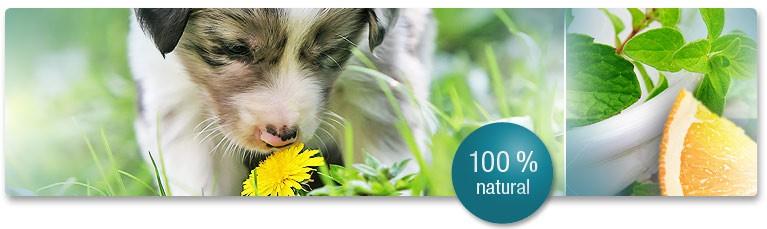 Състав на OralClean + Care Форте - Гел за Орална Грижа при Кучета и Котки