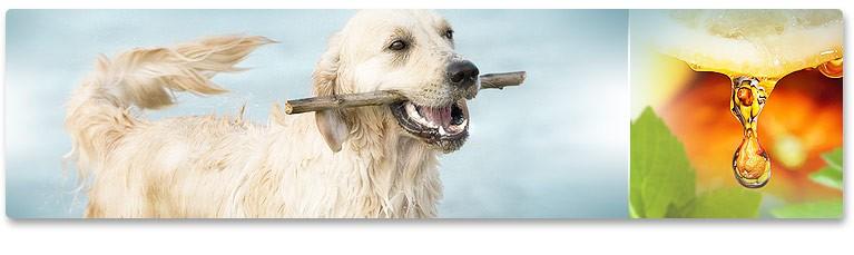 Ефективно Премахване на Зъбния Камък при Кучета и Котки