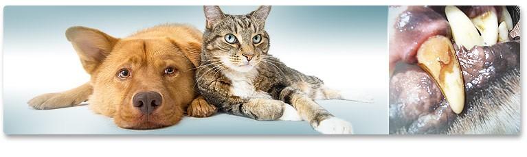 Зъбният камък при кучетата & котките