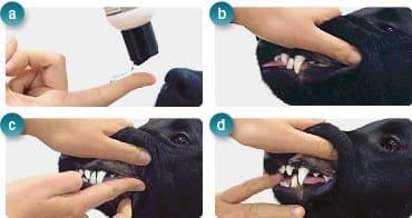 Приложение & Дозировка на Продуктите за Кучета и Котки OralClean + Care
