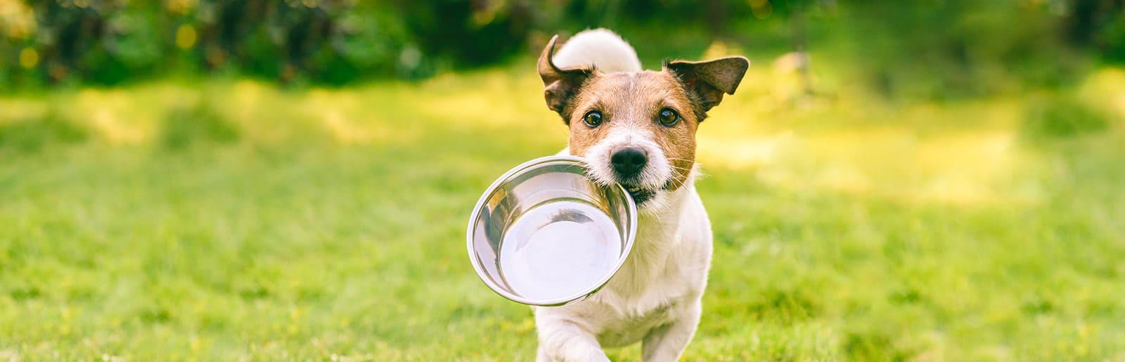 Храненето на Кучета & Продуктите PLATINUM