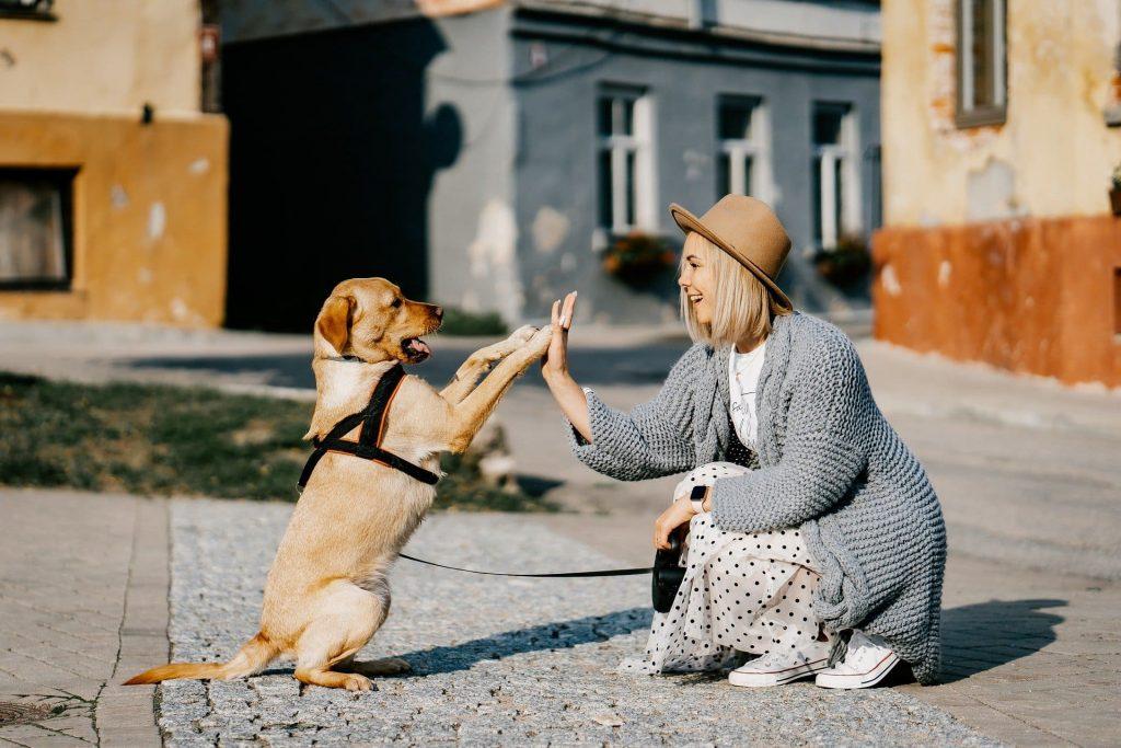 4 топ съвета за нови собственици на кучета