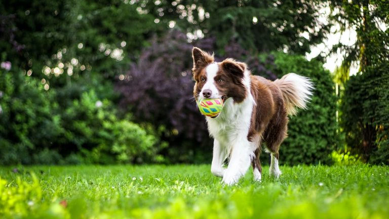 4 любими занимания, с които да внимавате при играта с вашето куче