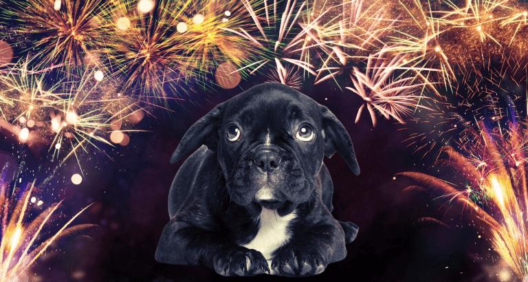 Фойерверки и домашни любимци – 4 начина да помогнете на кучето да се справи със страха